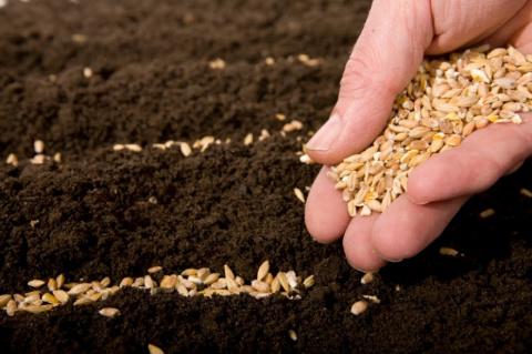 Как определить годность семян к посеву?