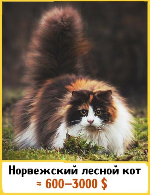 Коты, за которых не жаль зап…