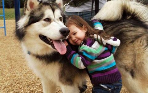 Дети и их 4-лапые друзья