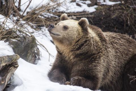 В зоопарке Хельсинки проснулись медведи