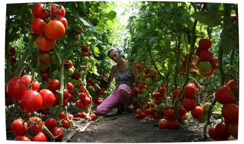 Экономный способ выращивания…