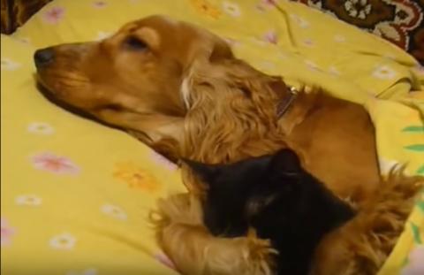 Душа радуется когда смотришь на отношения этой парочки. Пес Ральф обожает своего друга, кота Васю.
