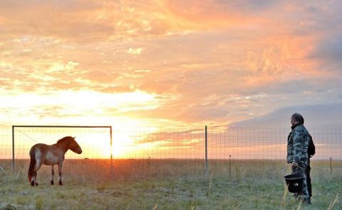 Владимир Путин выпустил в заповедник шесть лошадей Пржевальского