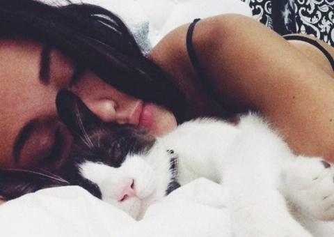 Почему кошки любят спать ряд…