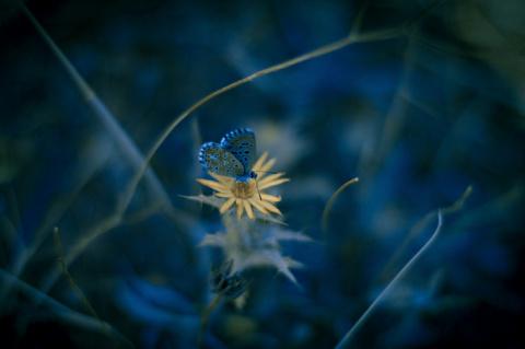 Природа под микроскопом