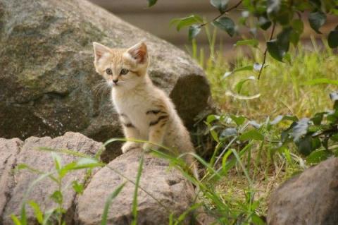 Милый ушастый котенок (11 фото)