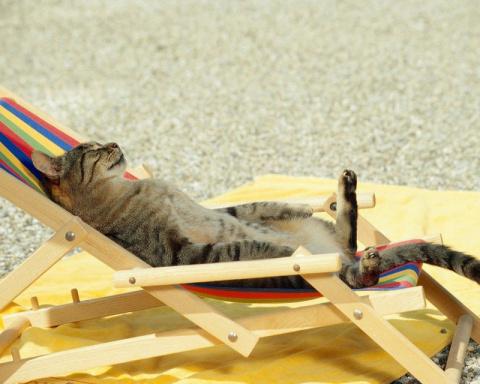 Больше половины россиян не поедут в отпуск из-за кошек