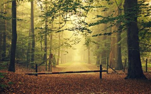 Войти в лес можно будет толь…