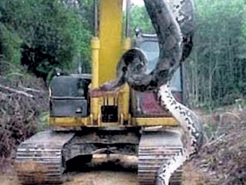 Рабочие обнаружили в пещере в Бразилии огромную анаконду