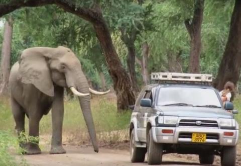 Когда слон вышел из лесу, он…