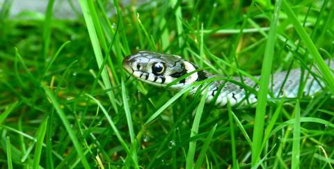 Колдуны, умеющие управлять змеями