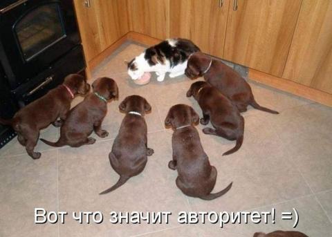 Кошки и собаки. Подборка сме…