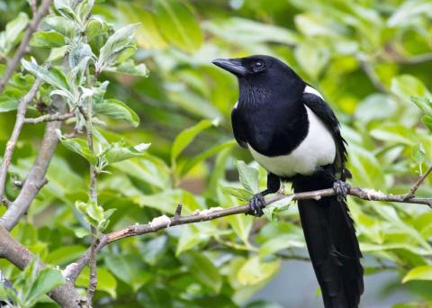 Наблюдение птиц и кустов признали полезным для психики