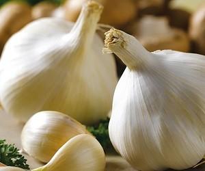Чеснок: несколько важных фактов о его лечебных свойствах