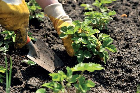 Несколько советов на все случаи огородных забот
