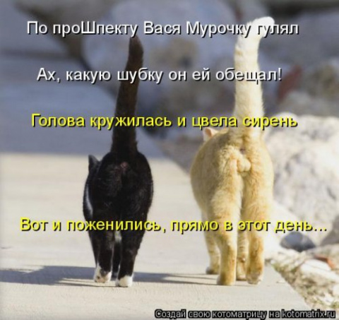 Котодром - 30 от Михалыча