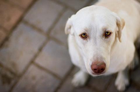 Мужчина под ЛСД «спас» собак…