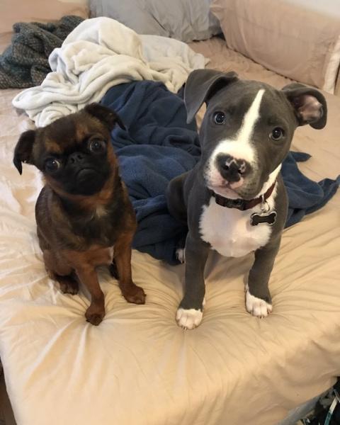 Необычная собачья дружба растрогала интернет