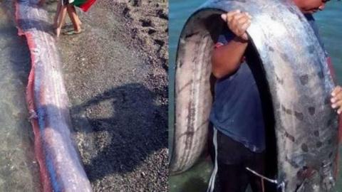 Огромные морские существа пу…