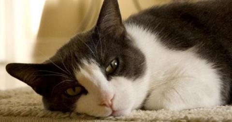 Если в твоем доме есть кот, …