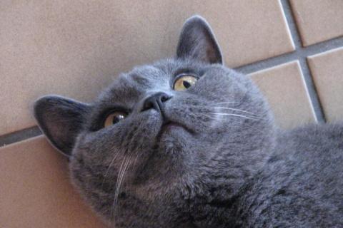 Заболевший кот не глотал таб…