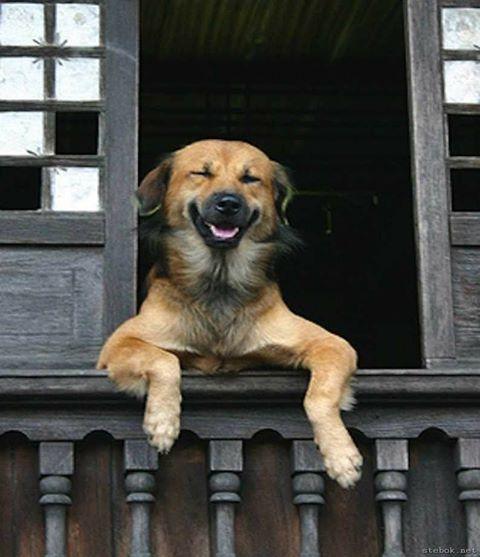 Собака друзей не лаяла на звонок в дверь. И решили они провести показательный урок!