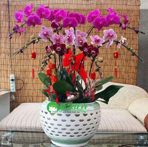 Как из одной орхидеи сделать 100?