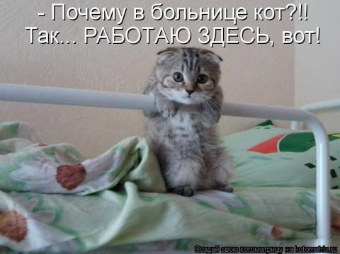 Без кота и жизнь не та. История неразлучности кота и бабушки