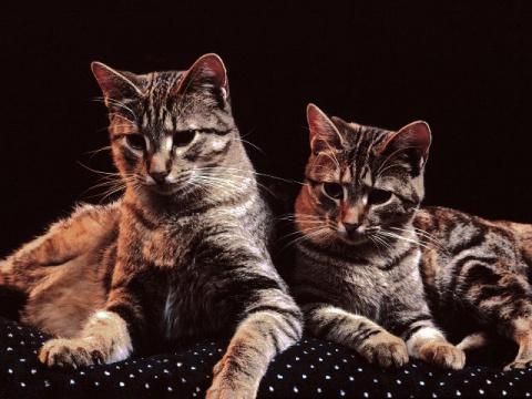 Лечимся у кошек.