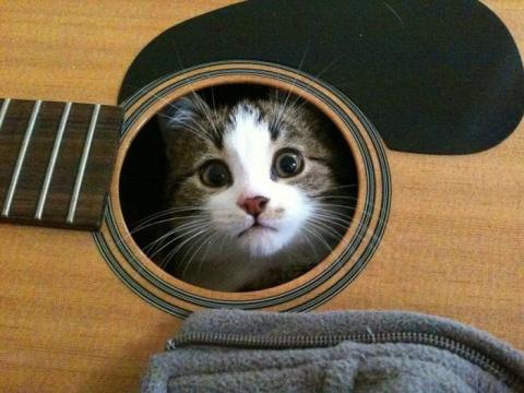 Коты и великая тяга к искусству