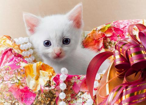 Животное – не лучший подарок к празднику