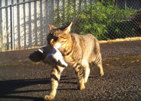 Кошка-клептоманка уже 4 года…