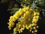 Цветочный гороскоп кельтов: февраль, март