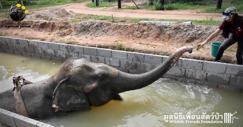 Слон, избавленный от роли из…