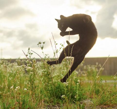 Ниндзя-коты. Не пробуйте повторить это дома