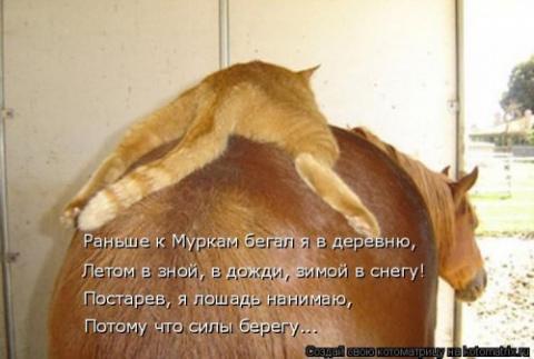 Свежая котоматрица (30 фото)