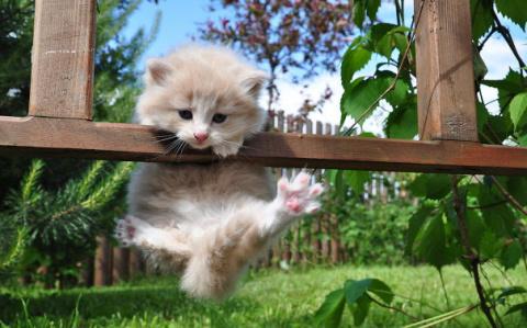 Существуют кошки-ниндзя! Не …