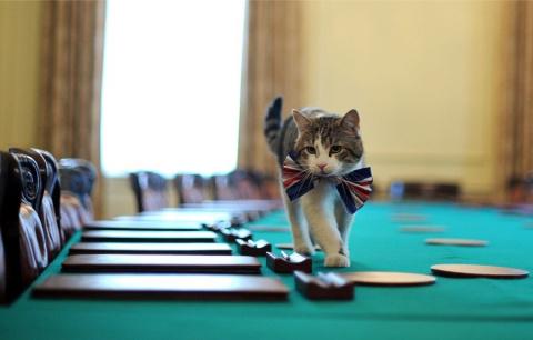 Кот работает - хозяин нет. И…