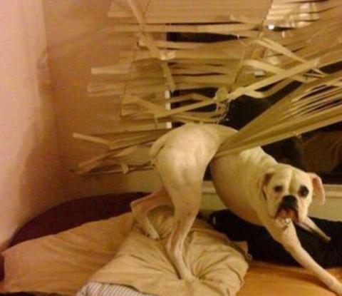 15 собак, которых застали за…