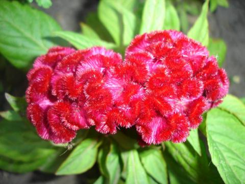 Цветы для Богини