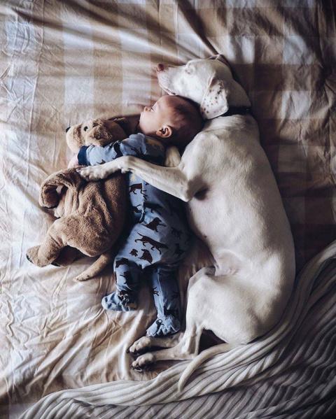 Когда собака и ребёнок – одна семья…