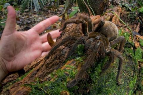 15 аномально крупных животны…