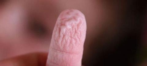 Вот почему наши пальцы рук и…
