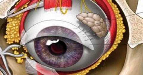 Пресбиопия: «климакс» глаз у…