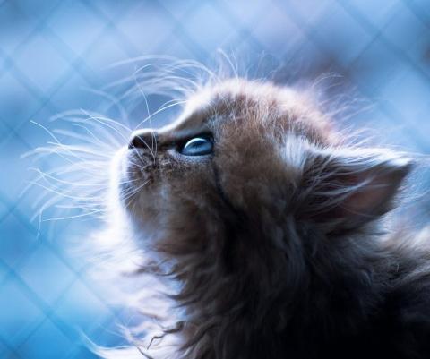 Фото очаровательных кошечек …