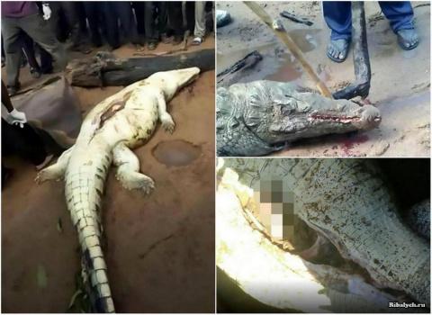 В желудке крокодила нашли останки 8-летнего мальчика