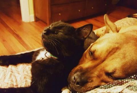 Собака и кошка, спасенные с …