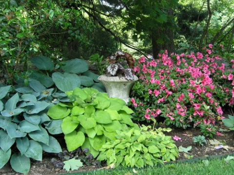 Растения и цветы, которым те…