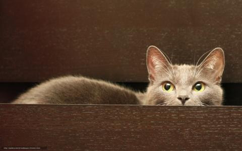 Кот решил помочь хозяйке разобраться в комоде. Вот что из этого получилось.