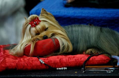 Выставка собак Westminster K…